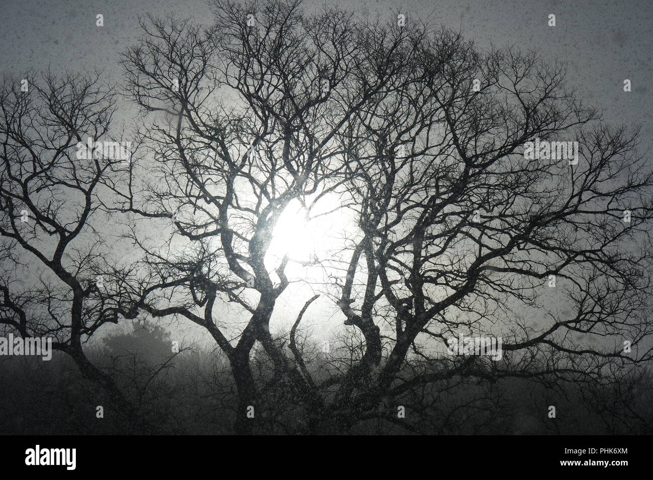 Tree in the sleet and back light - Stock Image