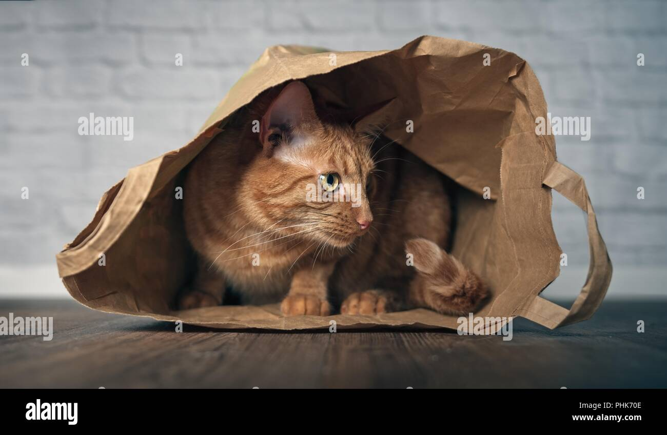 Cute ginger cat sitting in a paper bag and looking curious sideways. - Stock Image