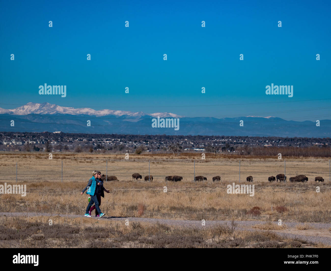 Visitors walk the Discovery Trail past bison near the visitor center, autumn, Rocky Mountain Arsenal Wildlife Refuge, Commerce City, Colorado. - Stock Image