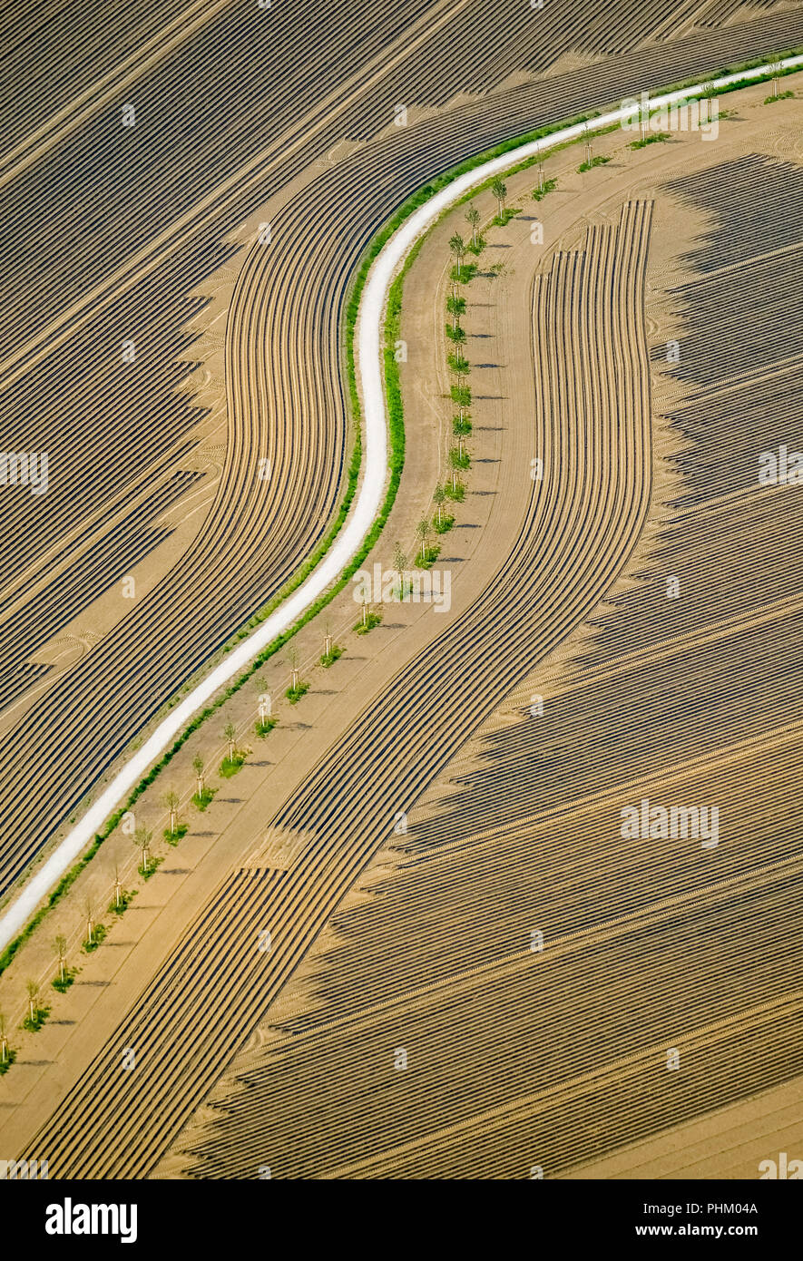 Aerial view, field with dirt road between An Der Linde and Castroper Straße in Sodingen,field, harrowed field, tire tracks, graphic tracks, Herne, Ruh - Stock Image