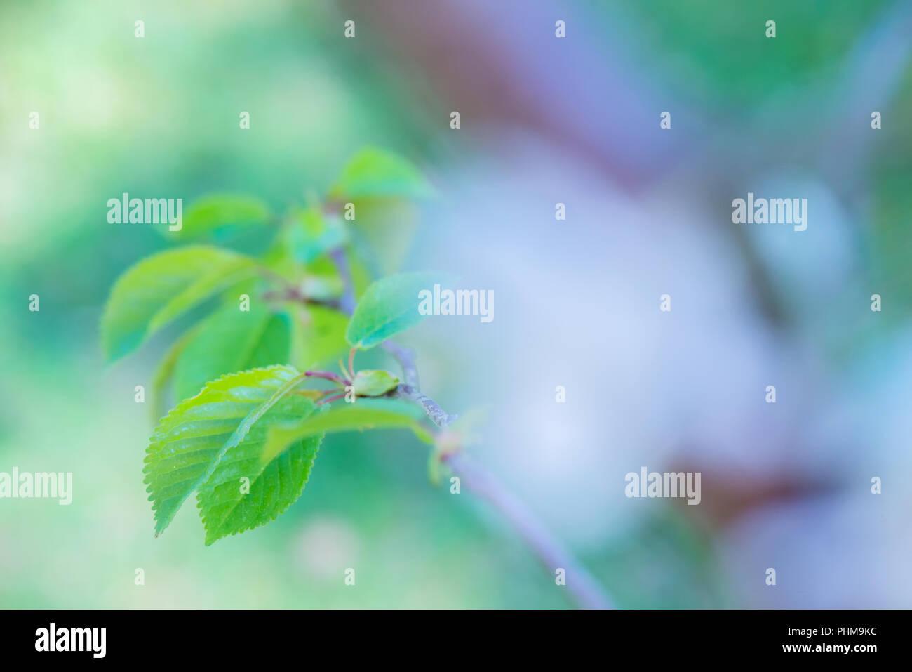 Macro shot of green leaf Stock Photo