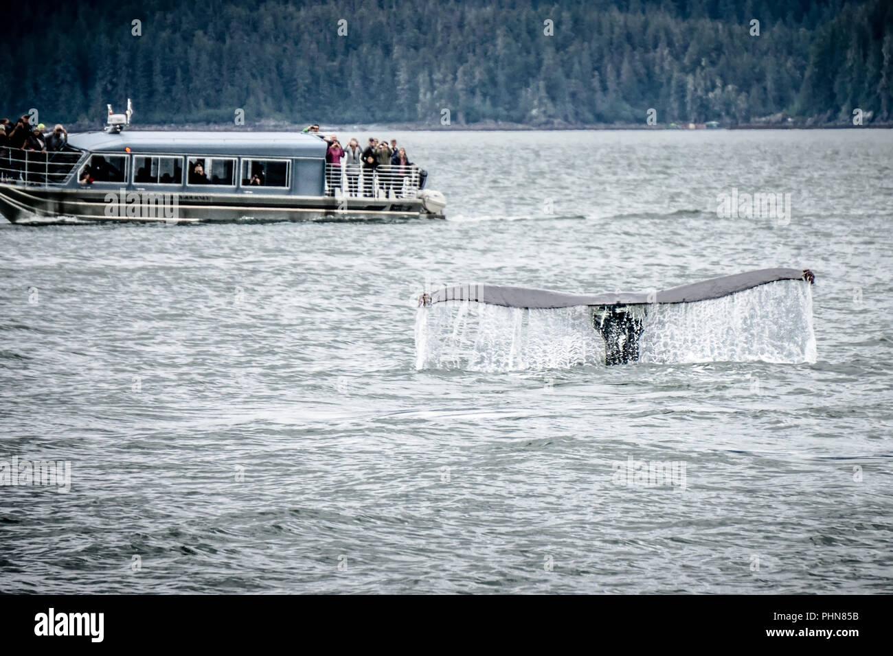 whale watching near skagway alaska - Stock Image