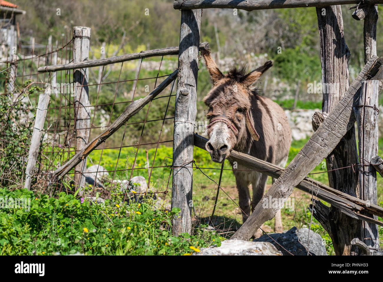 Small sad donkey on a farm - Stock Image