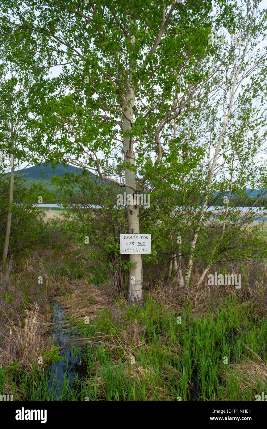 """""""Thank you for not littering"""" sign on a birch tree on the shore of Flagstaff Lake. Notice at a rest stop on Maine's High Peaks Scenic Byway. Eustis ME - Stock Image"""