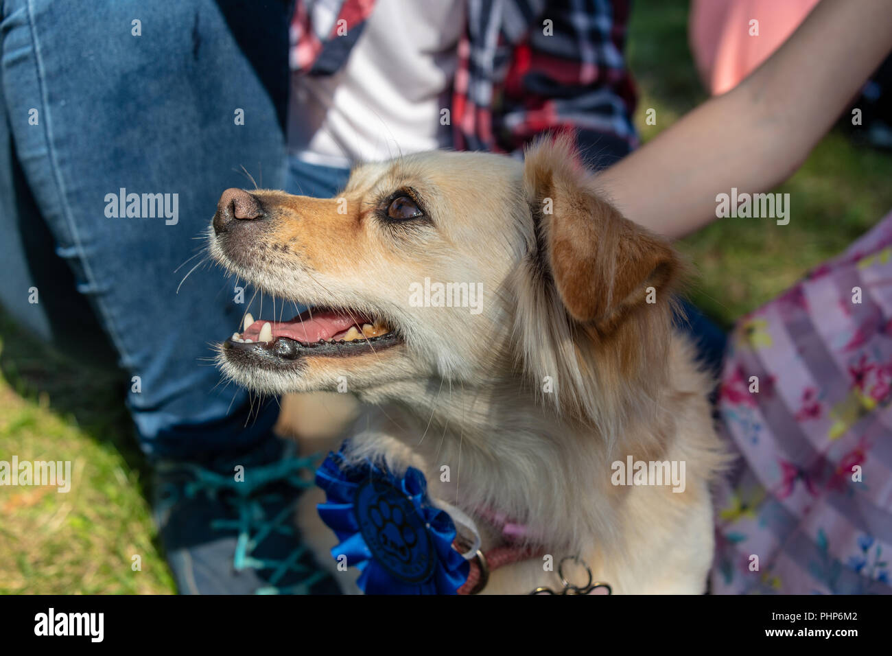 Bournemouth, UK. Sunday 2nd September 2018. A wide variety of dogs take part in the annual Dog Show at the RSPCA Ashley Heath centre near Bournemouth in Dorset. Awards included best condition bitch, waggiest tail, agility and speed test and overall best in show. Credit: Thomas Faull/Alamy Live News Stock Photo