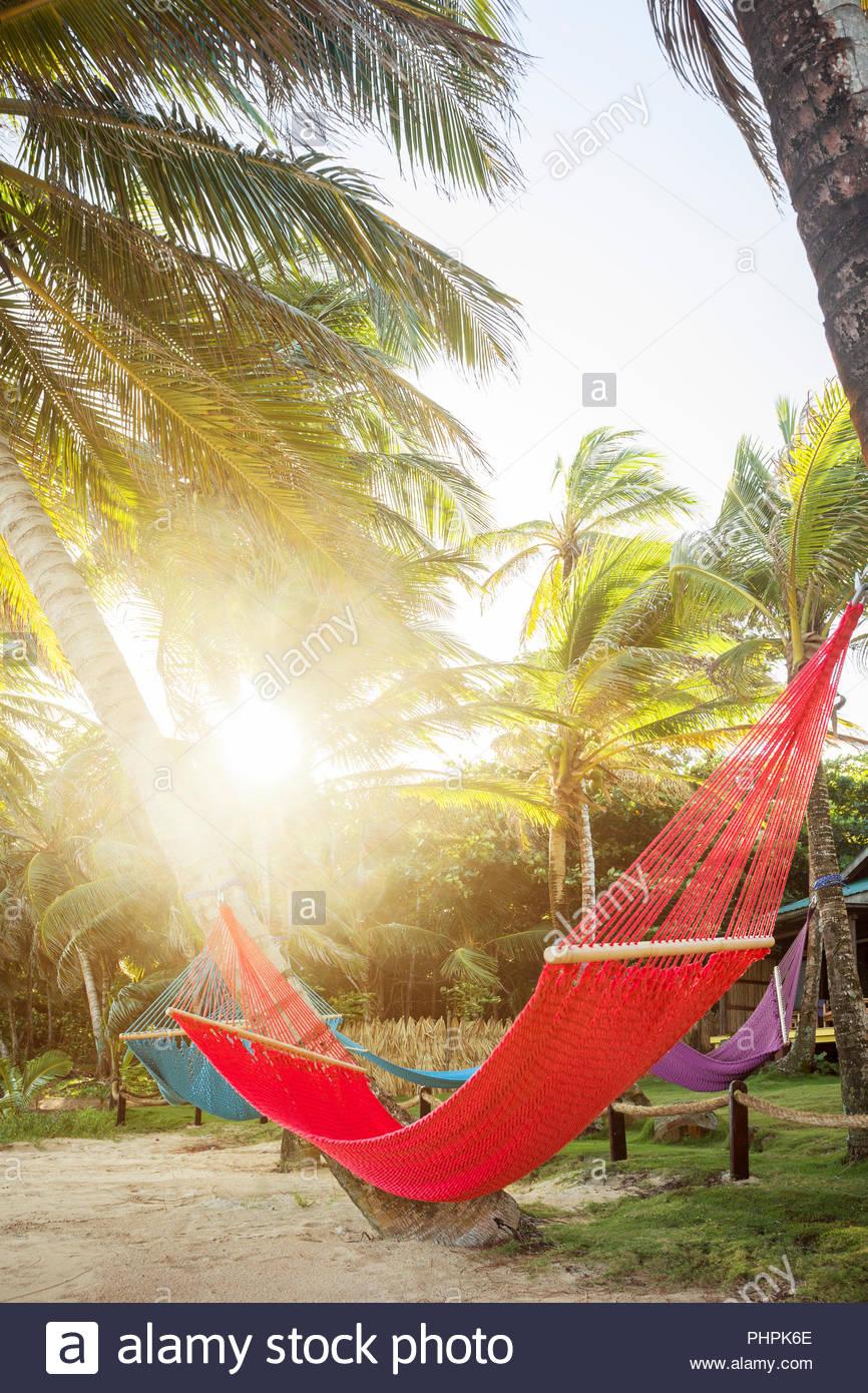 Hammock between palm trees on Little Corn Island, Nicaragua - Stock Image