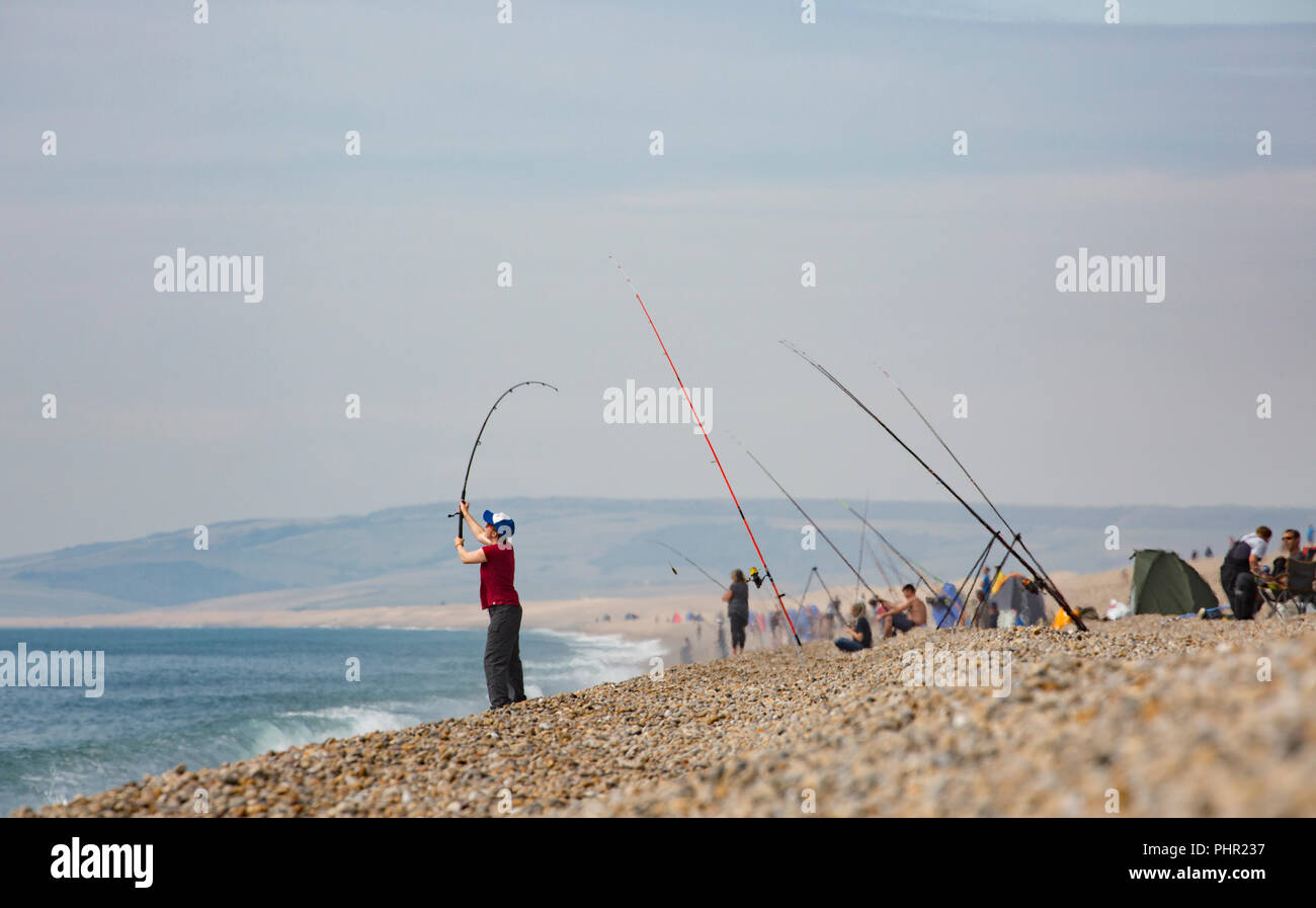 Looking westwards, an angler casts out on Chesil beach on a hot day with a heat haze rising from the beach on September 1 2018 with many other anglers - Stock Image