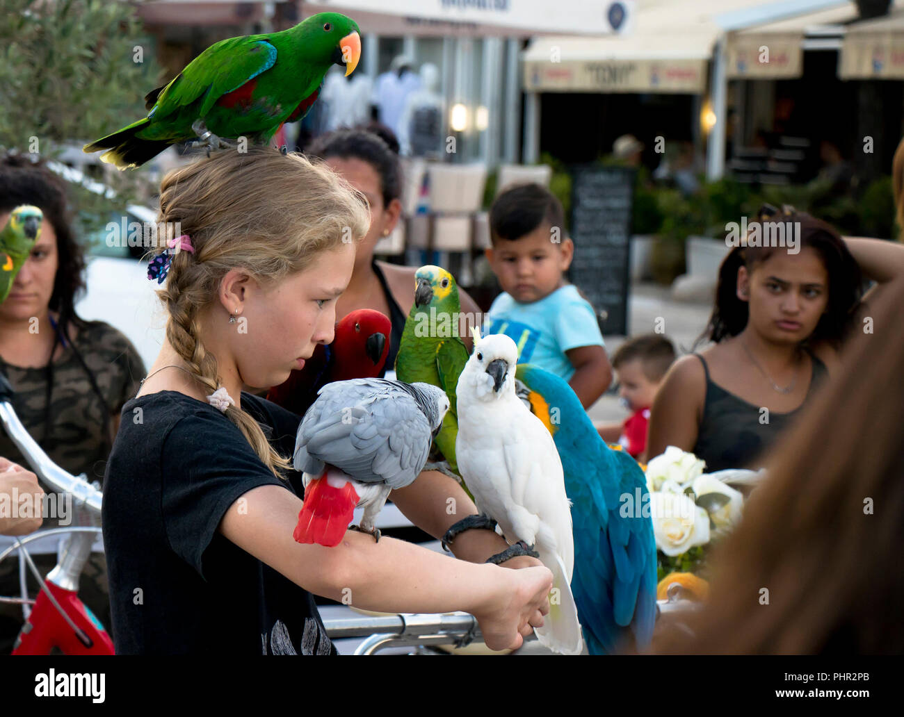 Vodice, Croatia - August 2, 2018: Young tourist teenage girl with parrots on head and shoulders posing for photo and people around her watching - Stock Image