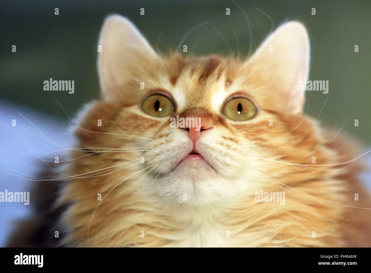 Portrait of a young cat - Stock Image