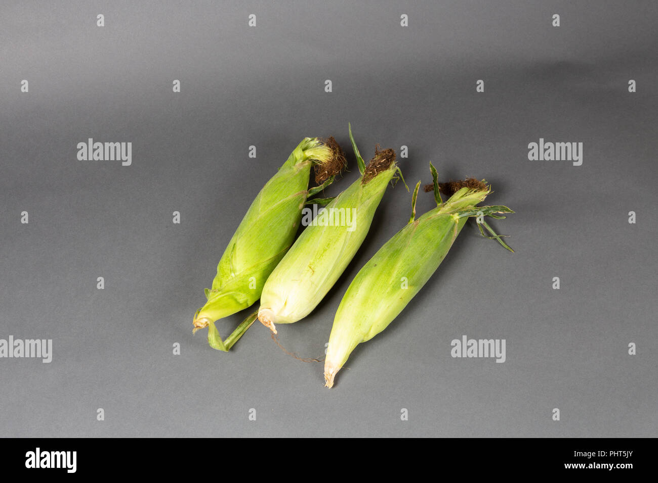 Three Ears of Corn in Husks on a Grey Background - Stock Image