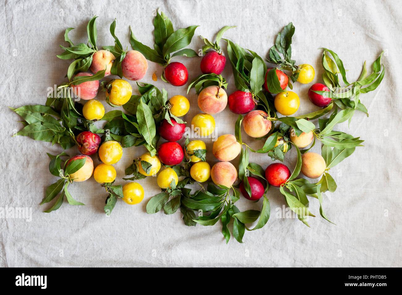 Fresh farm peaches laid our on a linen cloth - Stock Image