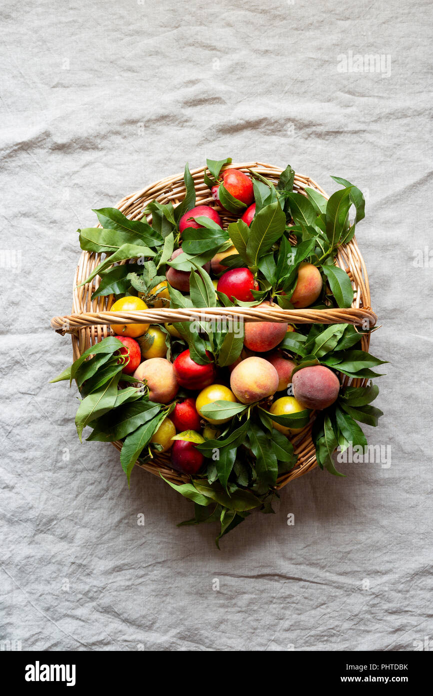 Fresh farm peaches laid our on a linen cloth - Stock Image