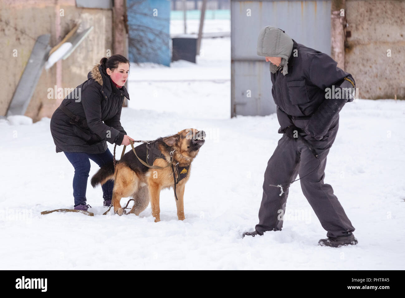 Gomel, Belarus - January 15, 2017: Occupation with a dog breed German Shepherd host protection from attack - Stock Image