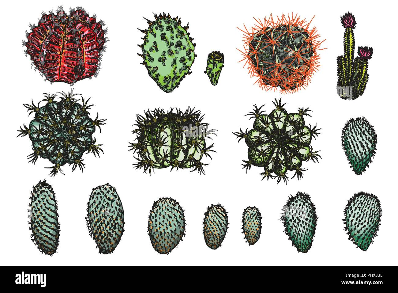Exotic Cactus Succulents Set Different Cactuses And Cacti In Color Drawing Style Natural Hand Drawing Desert Plants Vector Stock Vector Image Art Alamy
