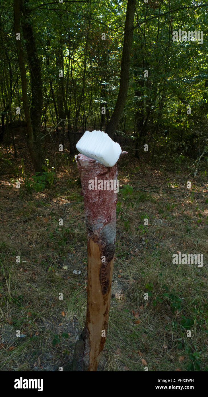 A salt stone, lickstone for wild animals, like deer and deer placed on a tree trunk in the forest Stock Photo