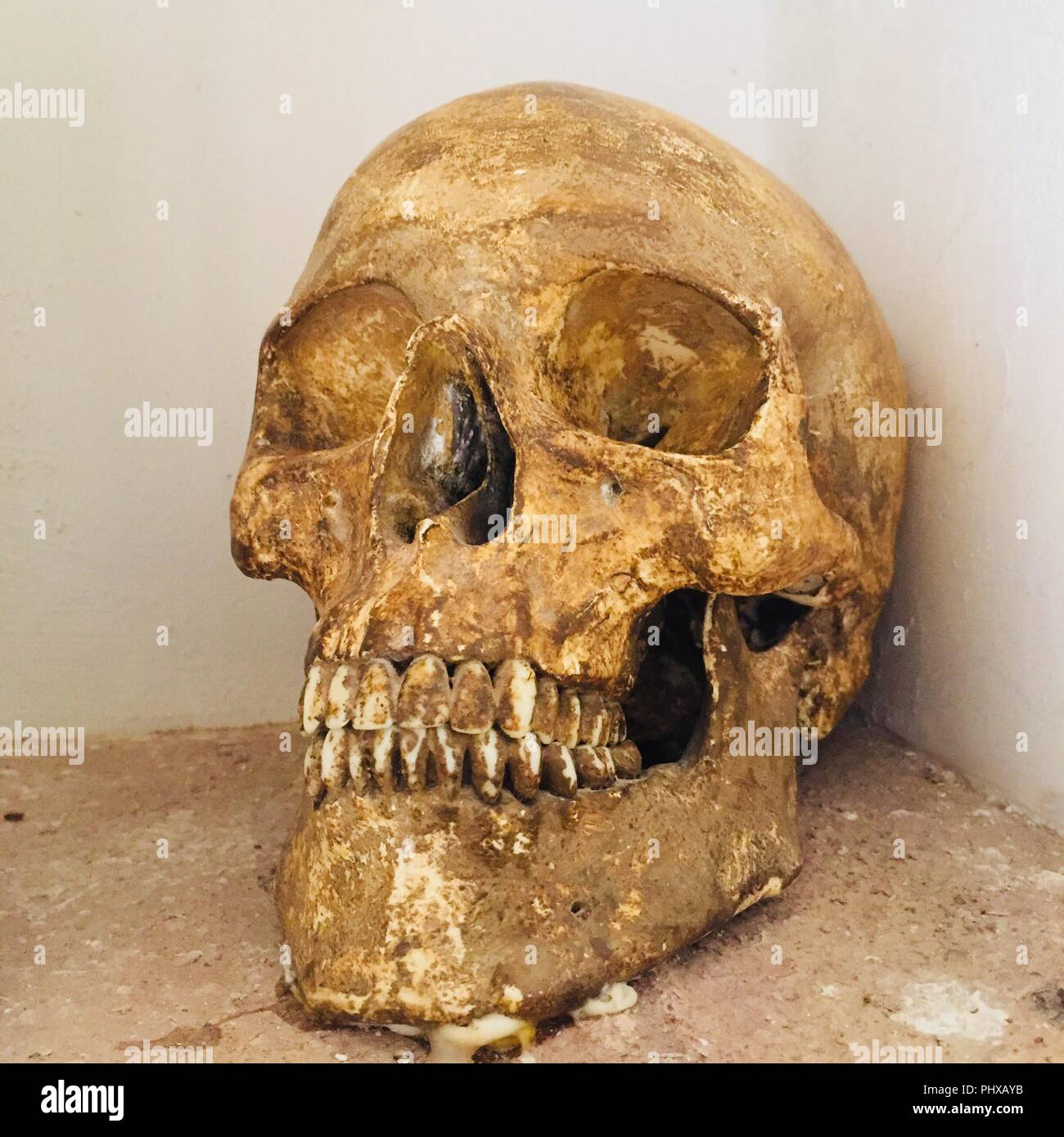 Real Skull - photograph takes in a Monastery in Spain (Yellow tones) - Stock Image