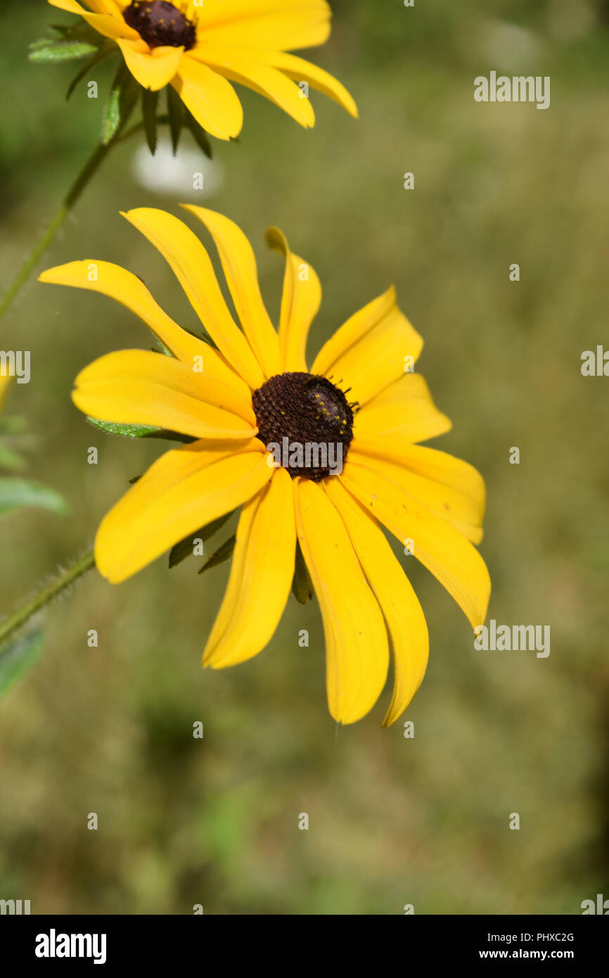Garden With Very Pretty Brown Betty Flowers Blooming Stock Photo