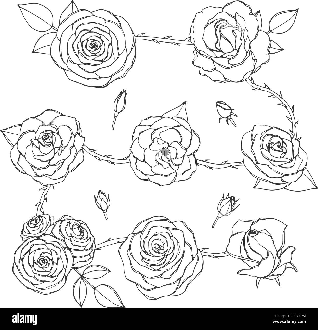 Vector set of rose flowers with buds, leaves and thorny stems line art isolated on the white background. Hand drawn floral collection of blossoms in s - Stock Image