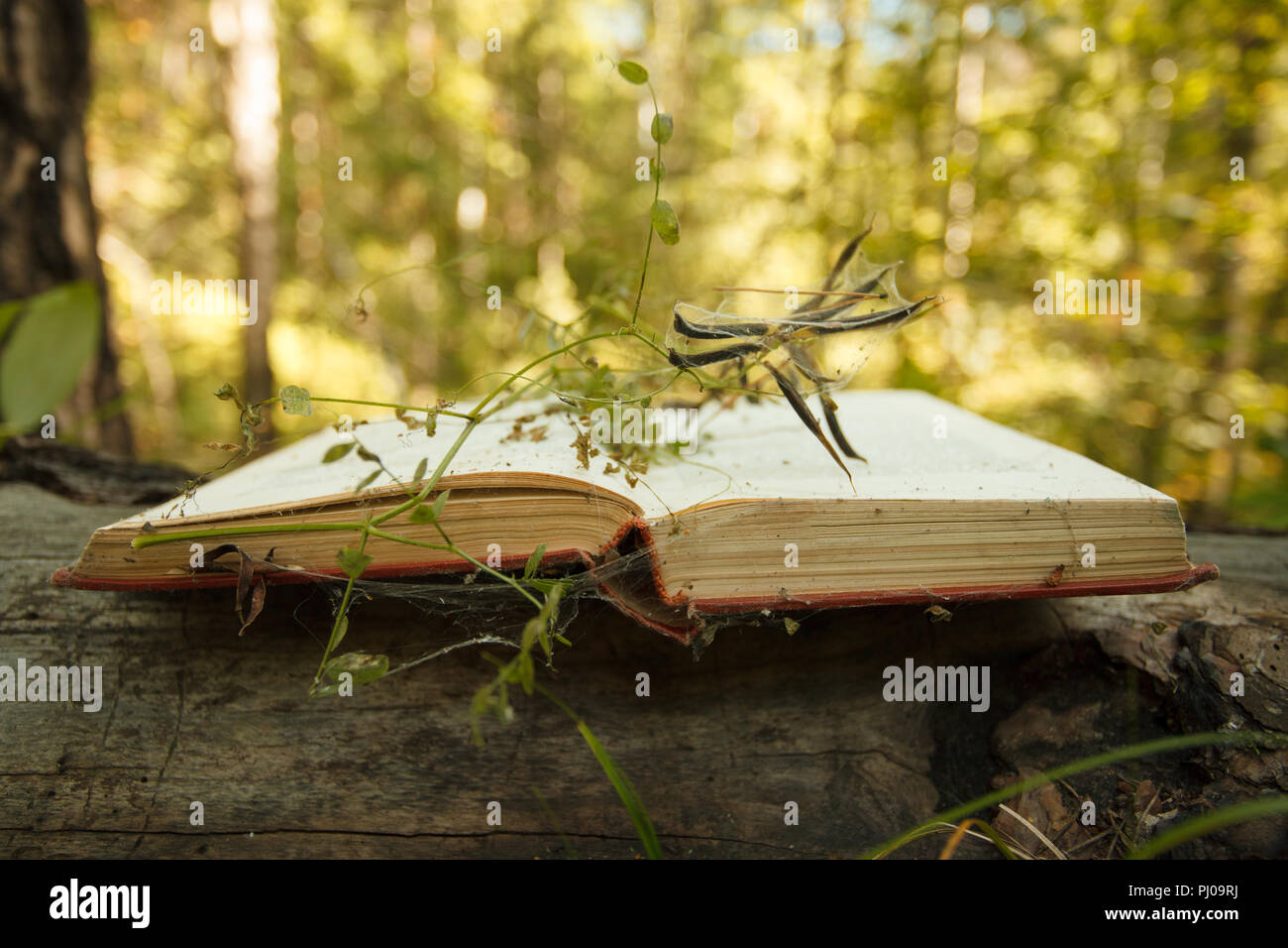 Open book on wooden background with magic mystery plant bokeh effect in the background - Stock Image