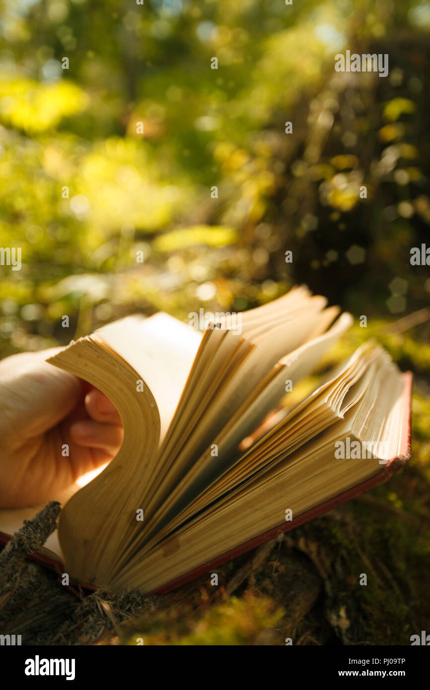 magic book glowing with yellow lights against the beautiful green forest, mystery, spiritual closeup - Stock Image