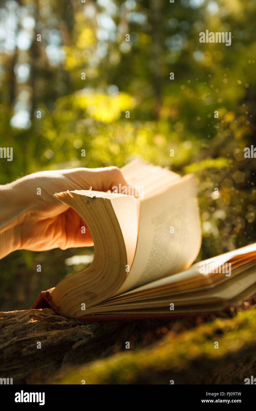 Old Book With Magic Lights in fairytale forest, mystic magic bright light on background - Stock Image