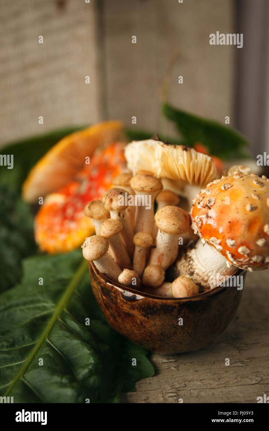 red Amanita muscaria and Agaric honey in cup, psychodelic toxic dessert Stock Photo