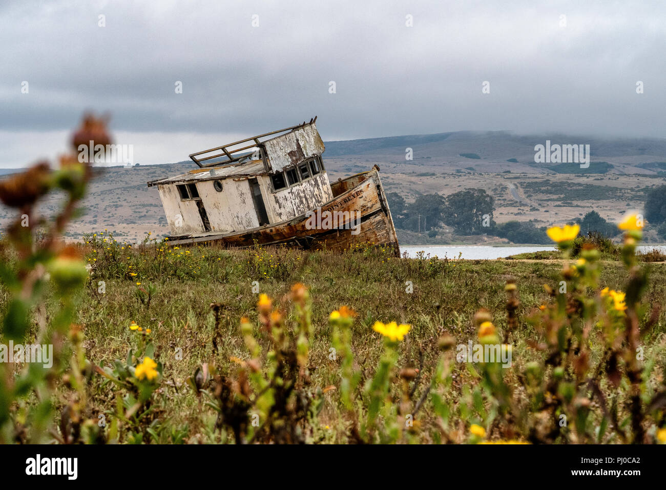 The Point Reyes abandoned shipwreck along the shore of Tomales Bay at Inverness, Point Reyes National Seashore, California. - Stock Image