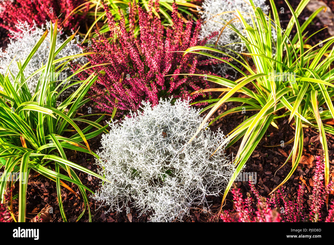 Autumn Flowers Flowerbed With Pink Heather Grass And Plants