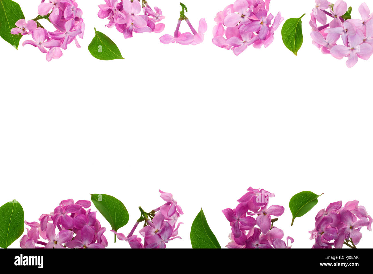 Flower Frame Collection Pink Purple Stock Photos Flower Frame