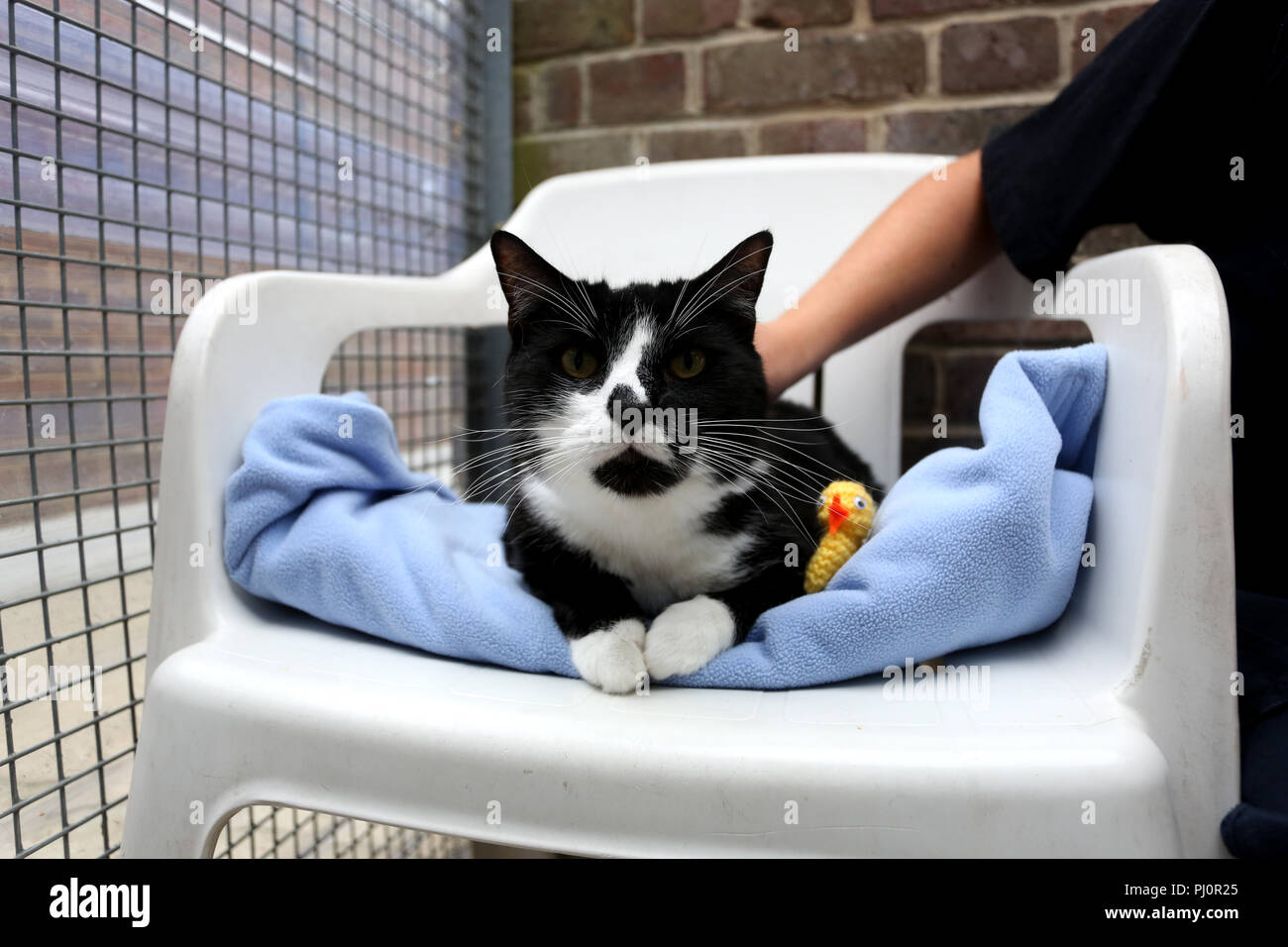 General views of the RSPCA Mount Noddy Re-Homing Centre near Chichester, West Sussex, UK. - Stock Image
