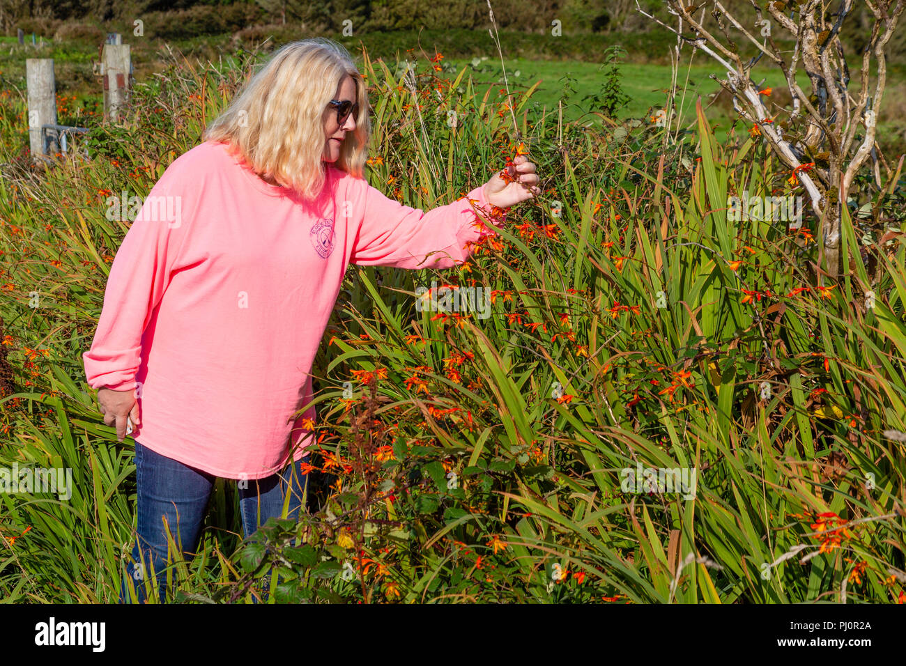 Older blond woman walking in country lane - Stock Image