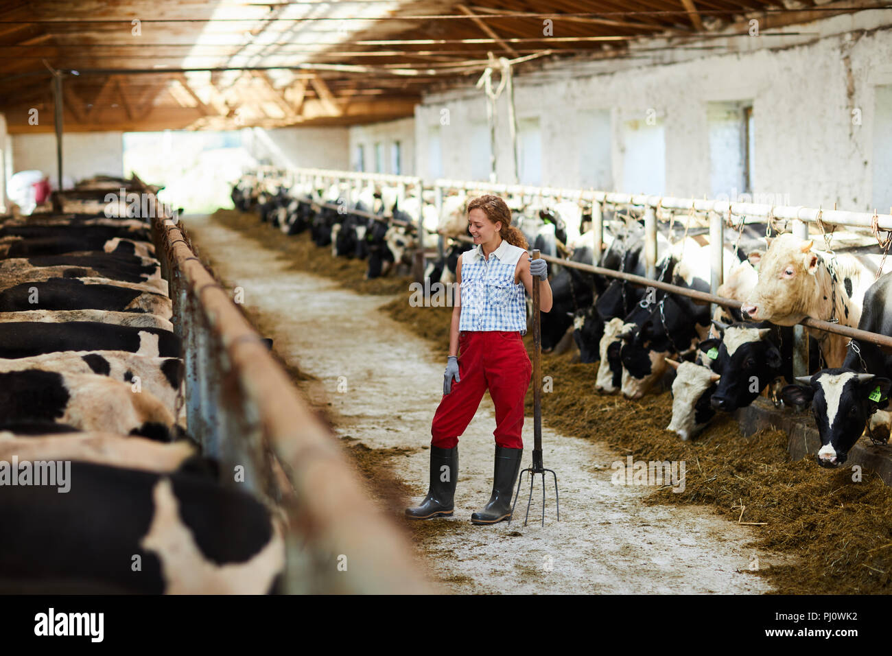Woman in Cowshed Stock Photo: 217608358 Alamy
