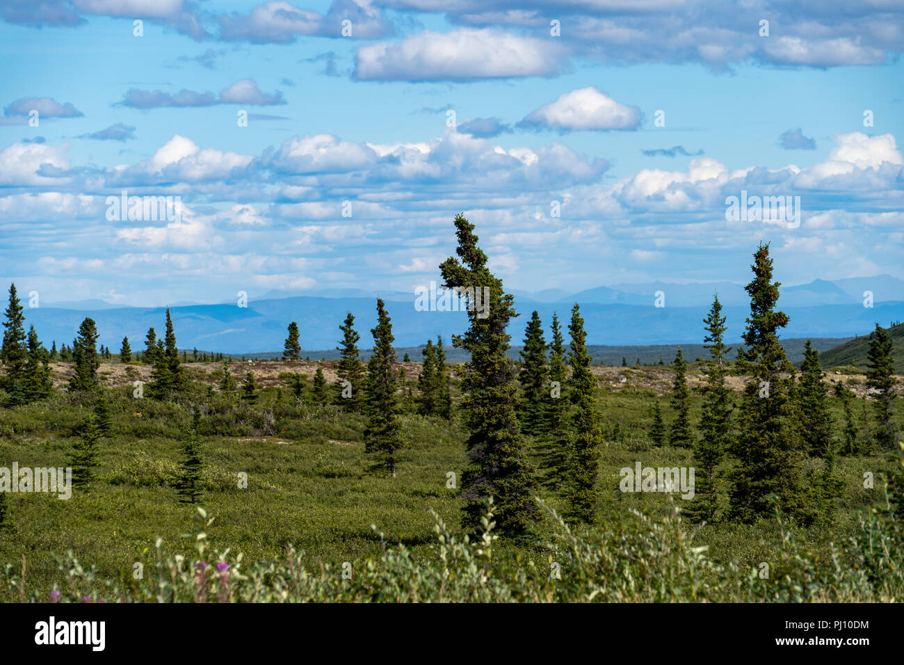 Raw Alaskan wilderness beauty along the Richardson Highway features a boreal tundra forest with Alaska Range mountains and partly cloudy sky - Stock Image