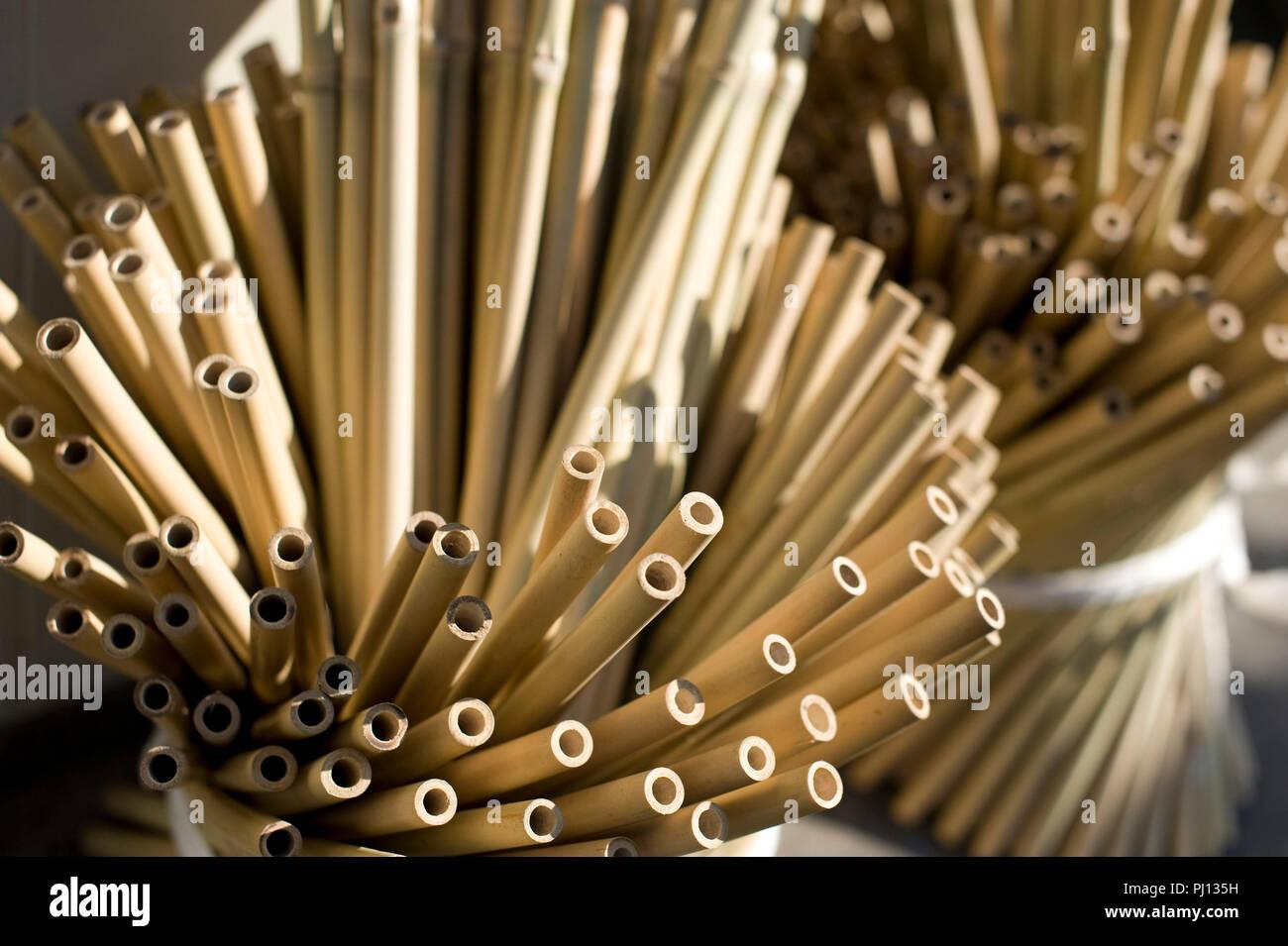 5038219dc24b5 Photo shows the bamboo used by Masao Uyama to make Boshu Uchiwa fans at his  atelier
