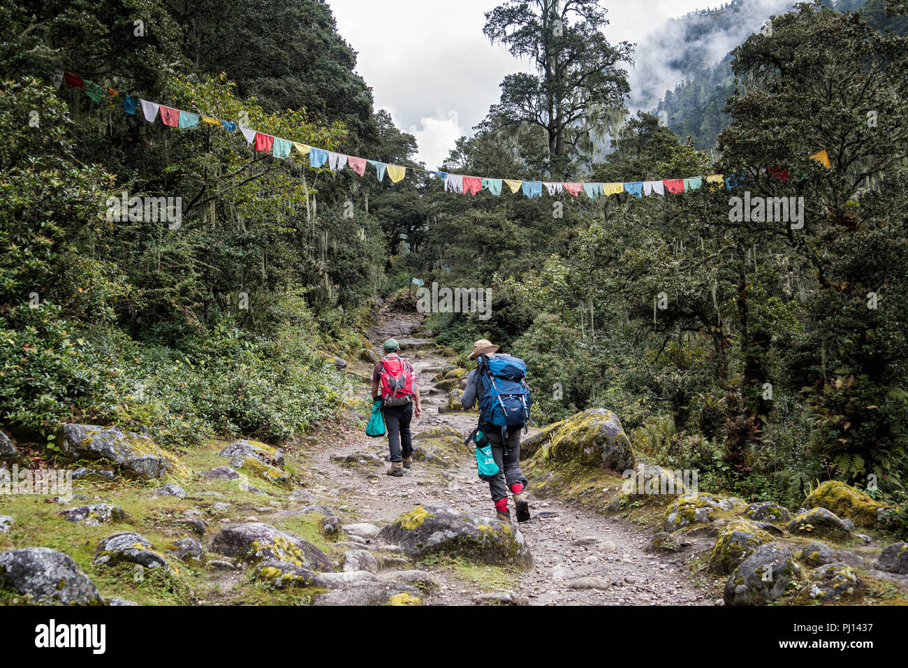 Forest and prayer flags on the way to Soi Thangthangkha, Paro District, Snowman Trek, Bhutan Stock Photo
