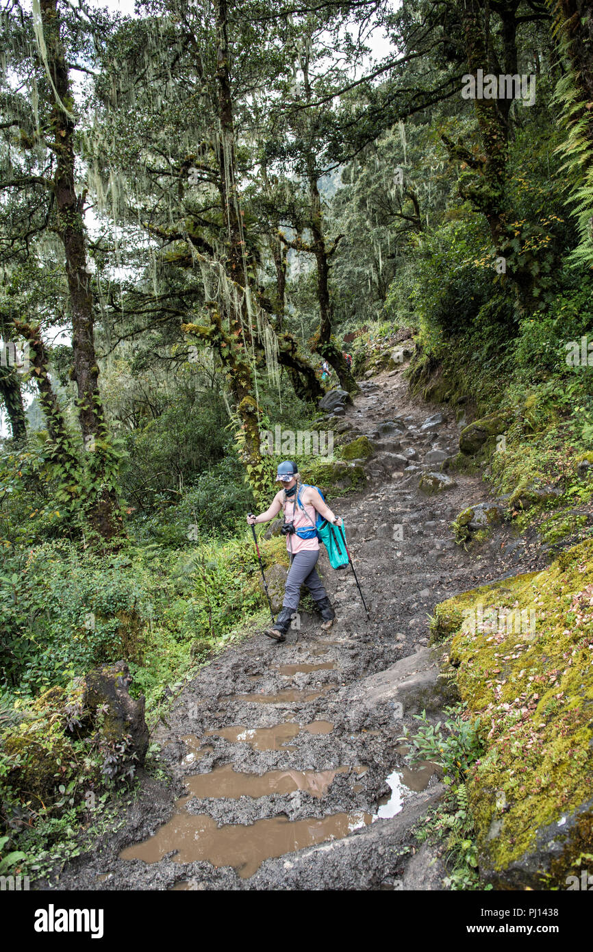 Muddy trail between Thongo Zampa and Soi Thangthangkha, Paro District, Snowman Trek, Bhutan Stock Photo