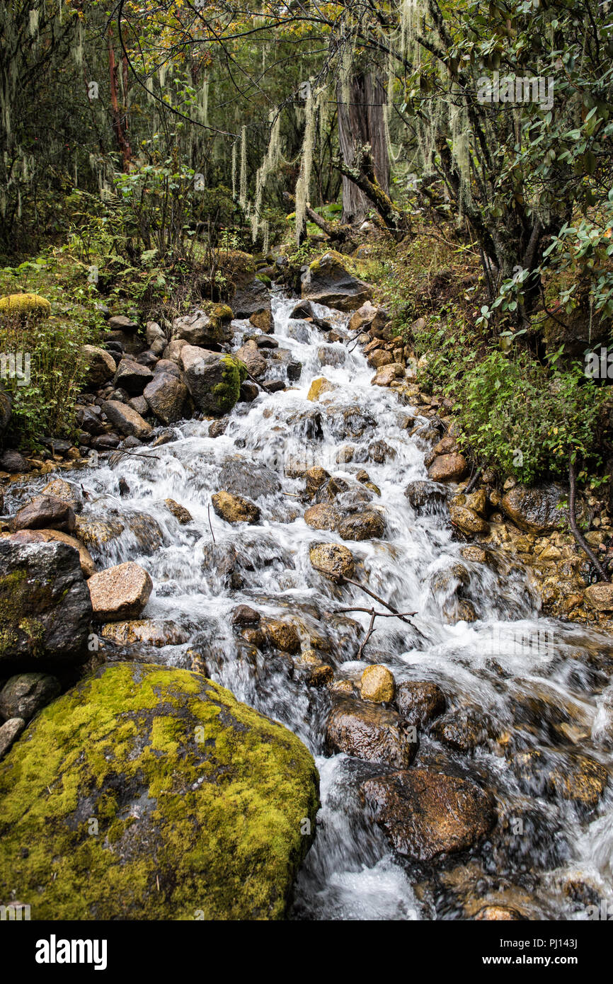 Stream in the rainforest between Soi Thangthangkha and Jangothang, Thimphu District, Snowman Trek, Bhutan Stock Photo