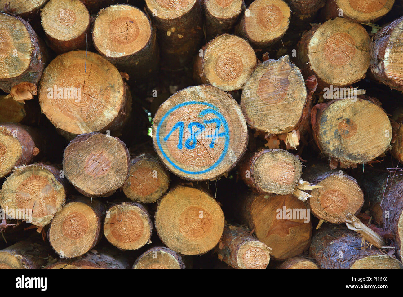 Cut surfaces of stacked tree trunks. Stock Photo