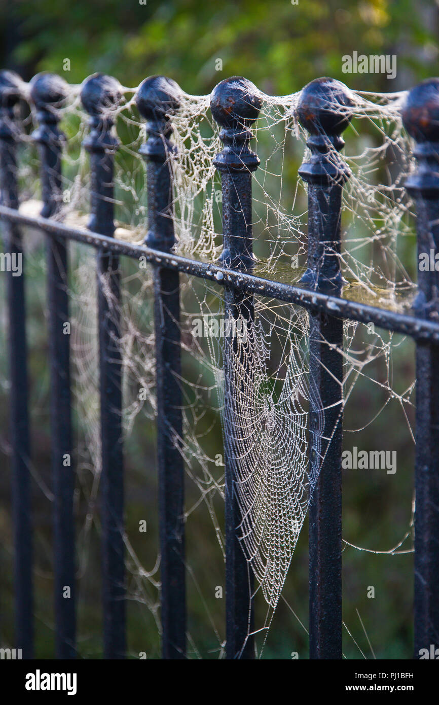 Cobwebs covered in dewdrops on a metal fence in autumn. - Stock Image
