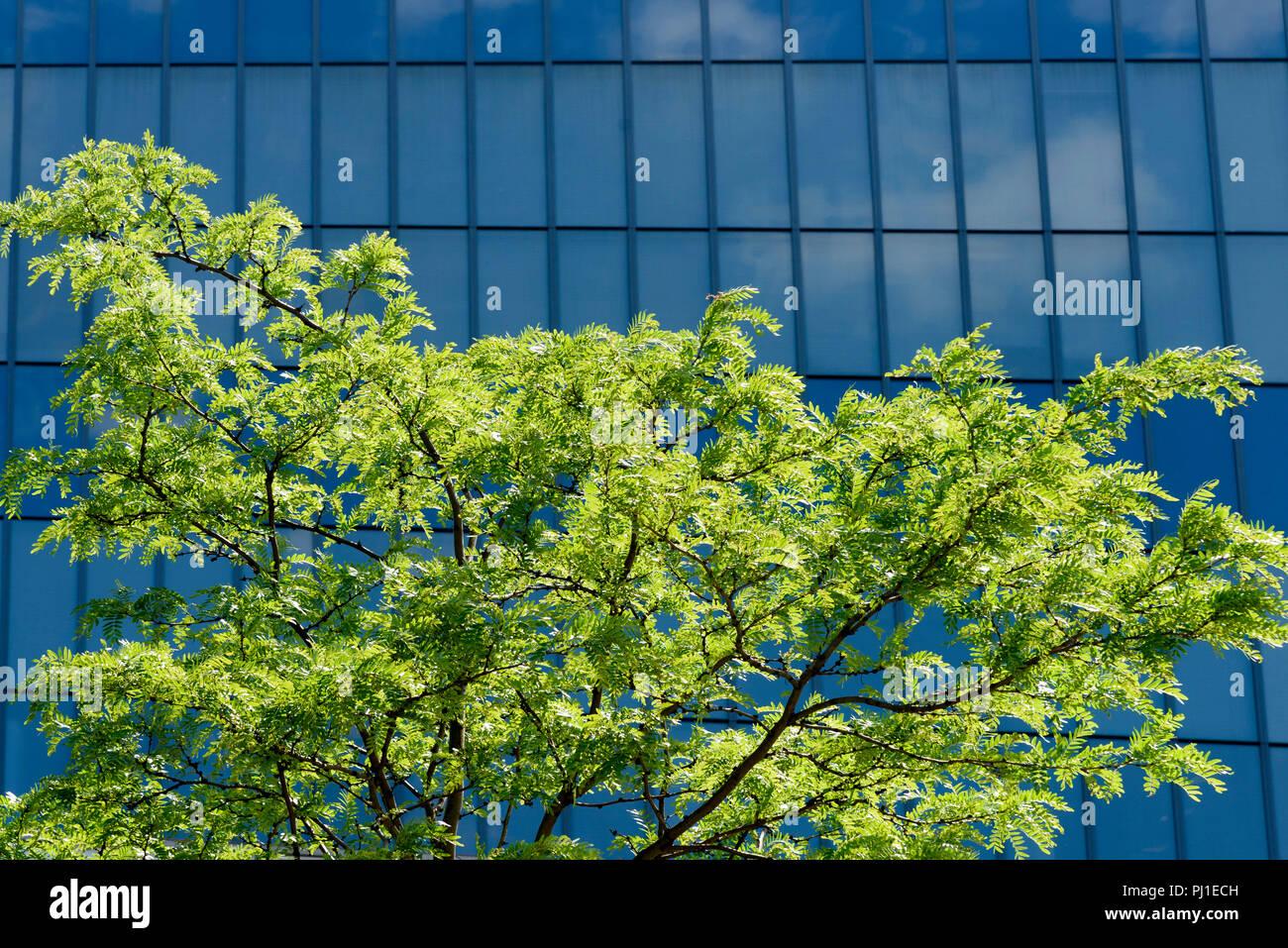 05-2017 New York, USA. Photo: © Simon Grosset - Stock Image