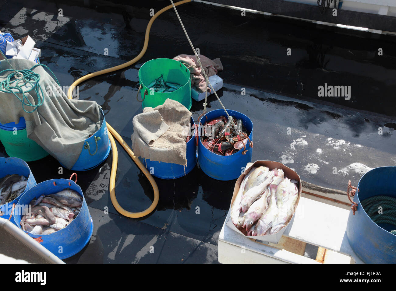 The deck of a small fishing boat with freshly caught fish. A bucket of crabs and lobsters is about to be lifted off the deck - Stock Image