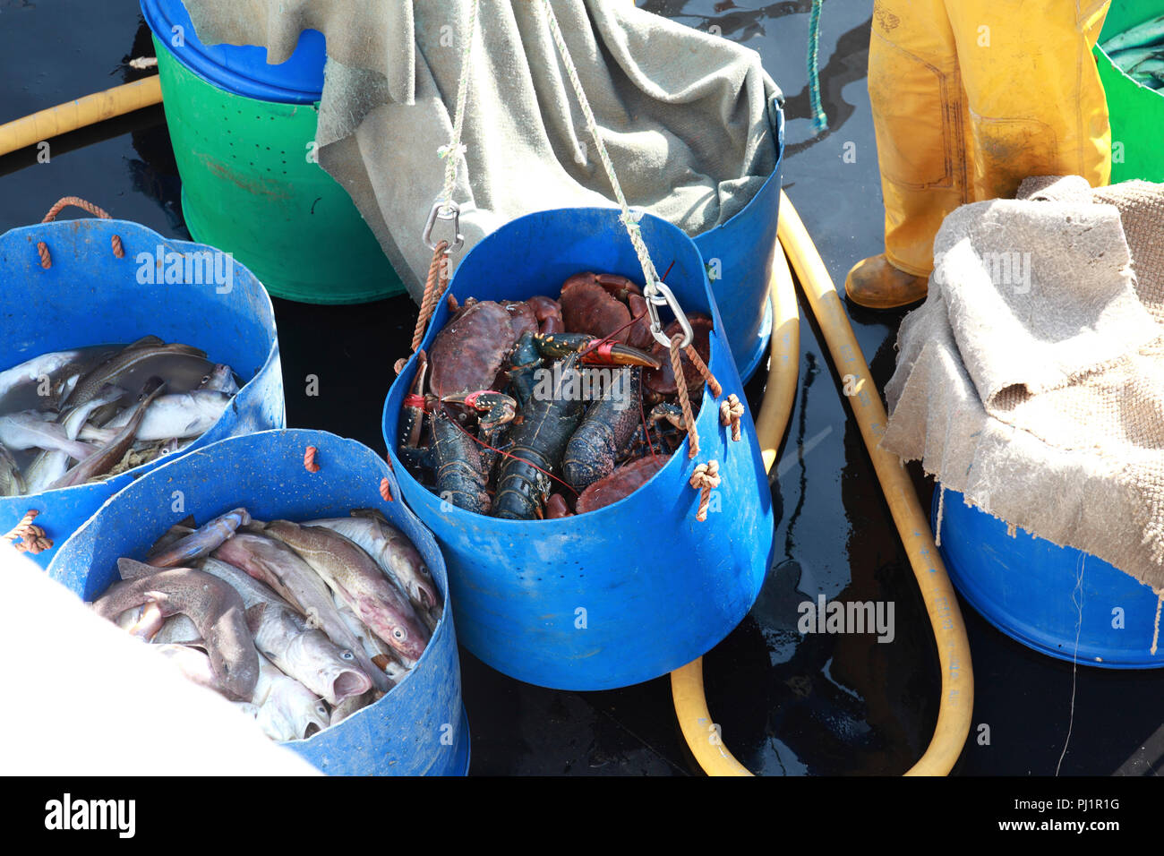 The deck of a small fishing boat with freshly caught fish. A bucket of crabs and lobsters is being lifted off the deck - Stock Image
