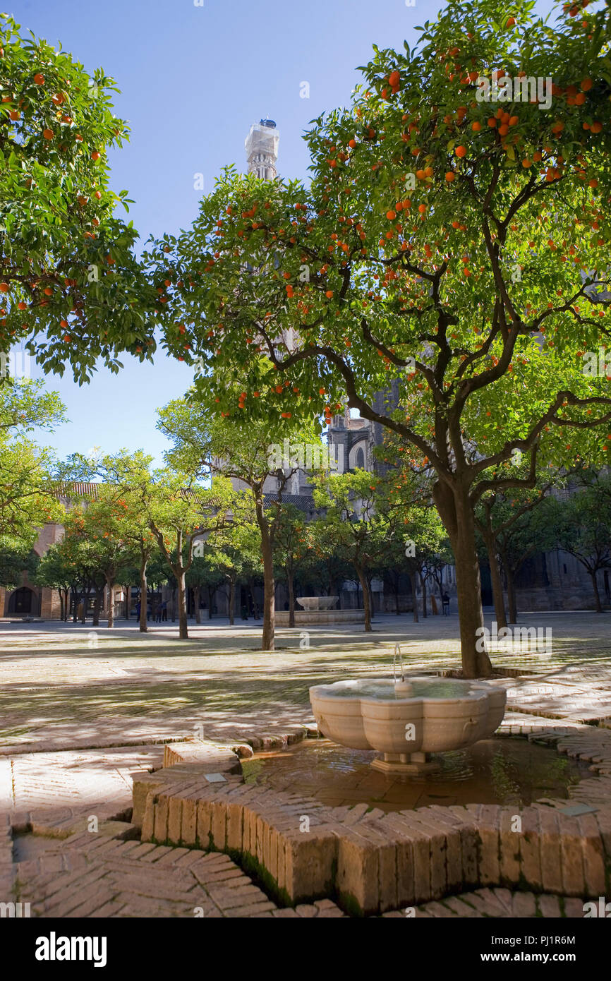 Fountain in the Patio de los Naranjos, or Orange Tree Courtyard, part of the Seville Cathedral complex, Sevilla, Andalusia, Spain - Stock Image