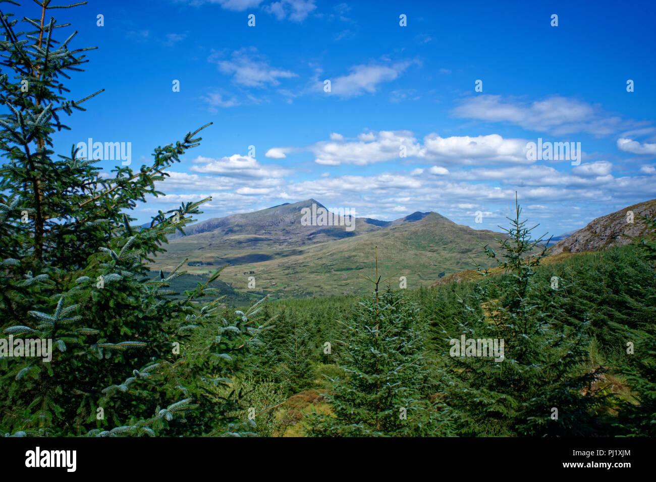Snowdon Through The Trees - Stock Image