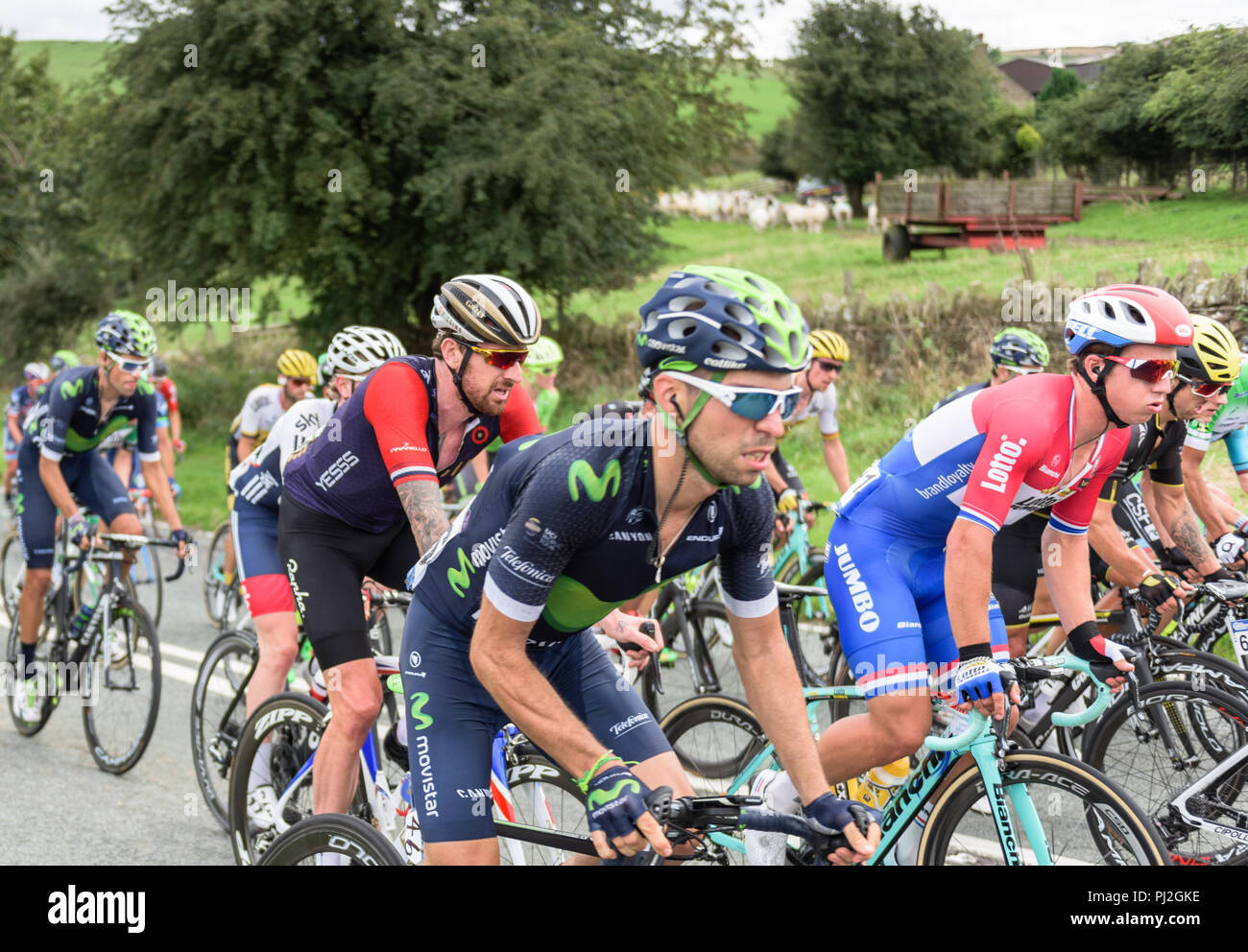 2016 Tour of Britain cyclists, featuring Bradley Wiggins, riding towards Macclesfield, Cheshire - Stock Image