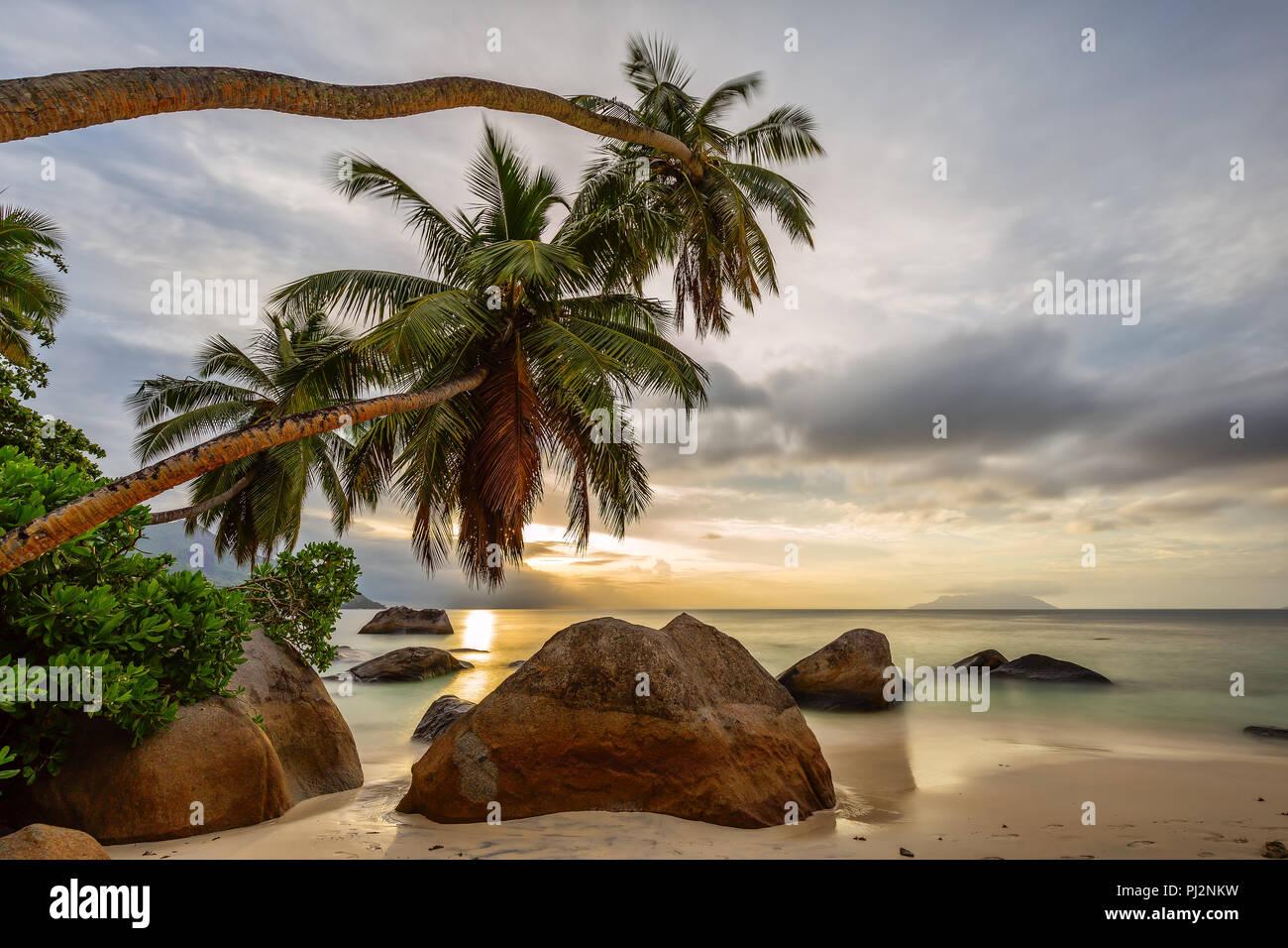 The coconut palms stretch far over the granite rocks towards the sun. Stock Photo
