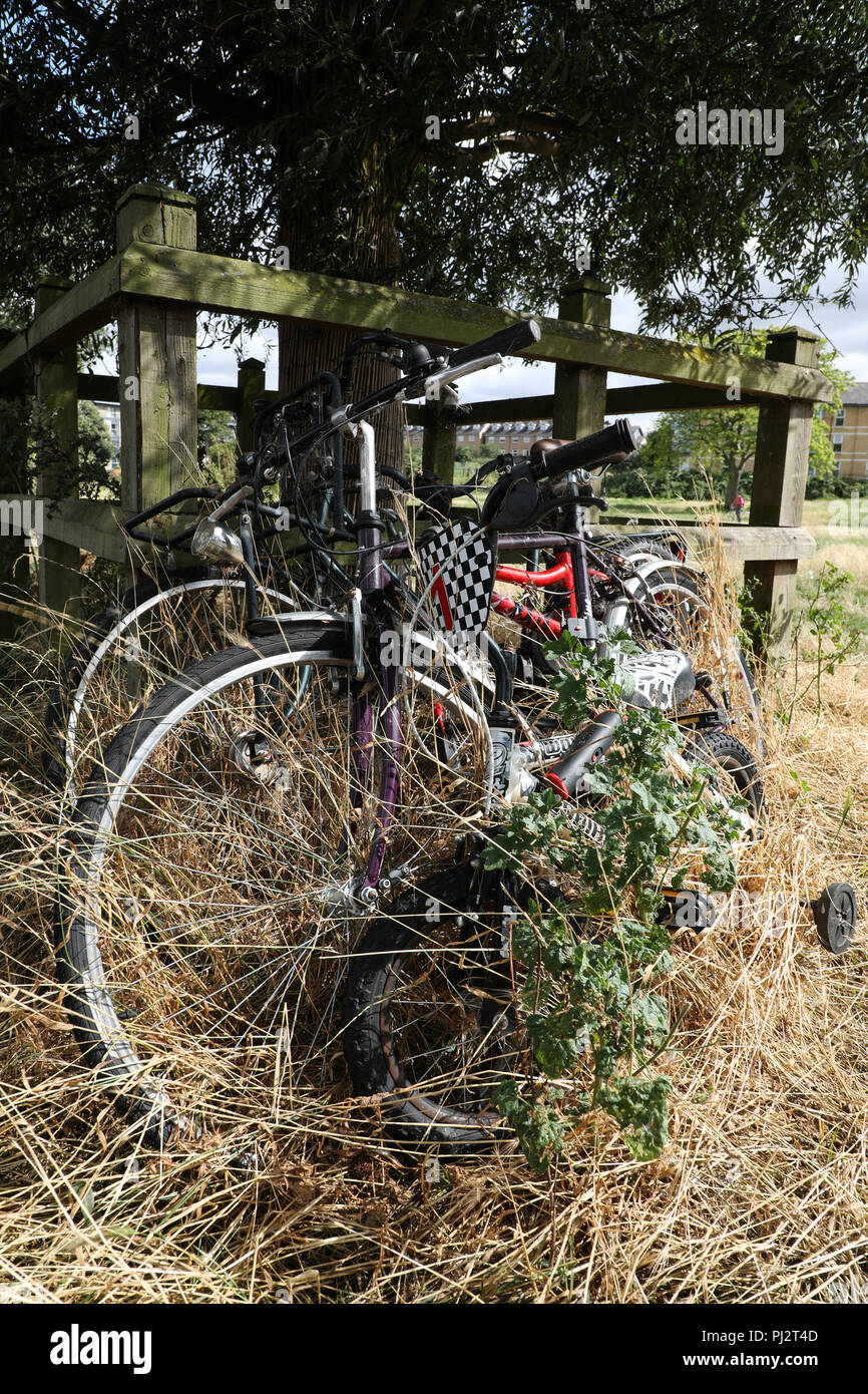 Two abandoned bicycles, overgrown and rusting, on the bank of the River Cam in the University city of Cambridge, UK. - Stock Image