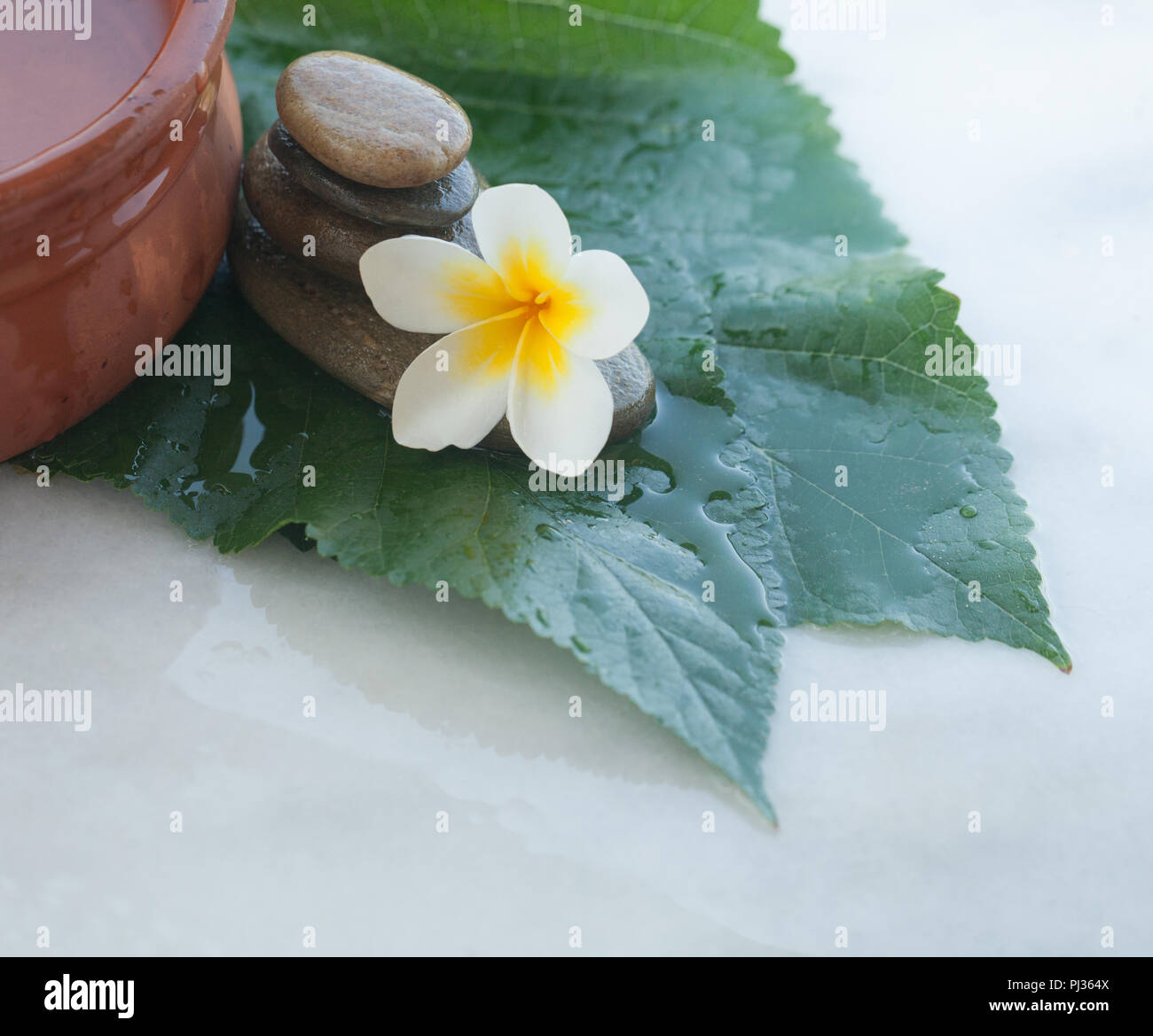 Tropical White Flower On Green Big Leaves And Stones For Massage