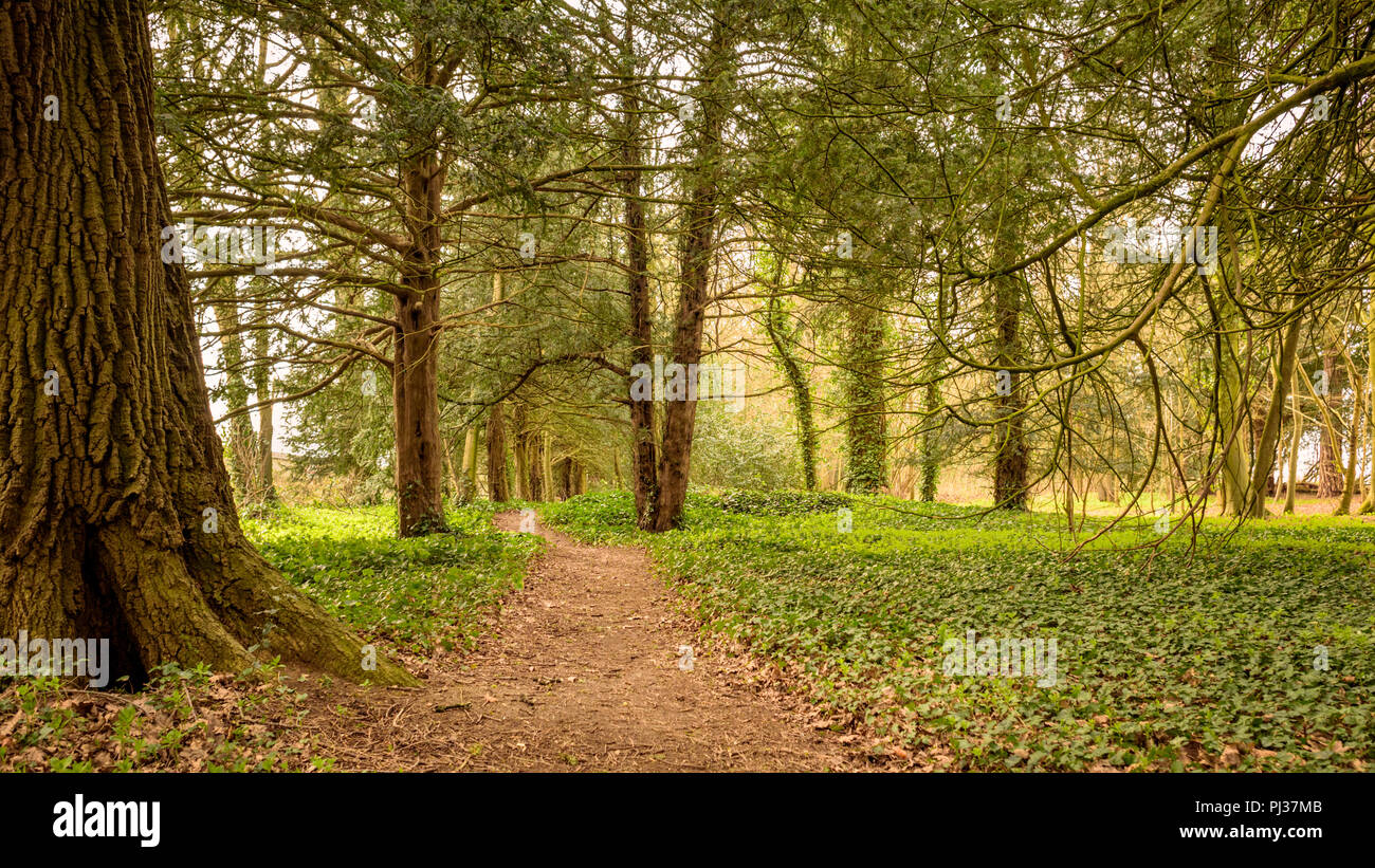 Find Your Path - Stock Image
