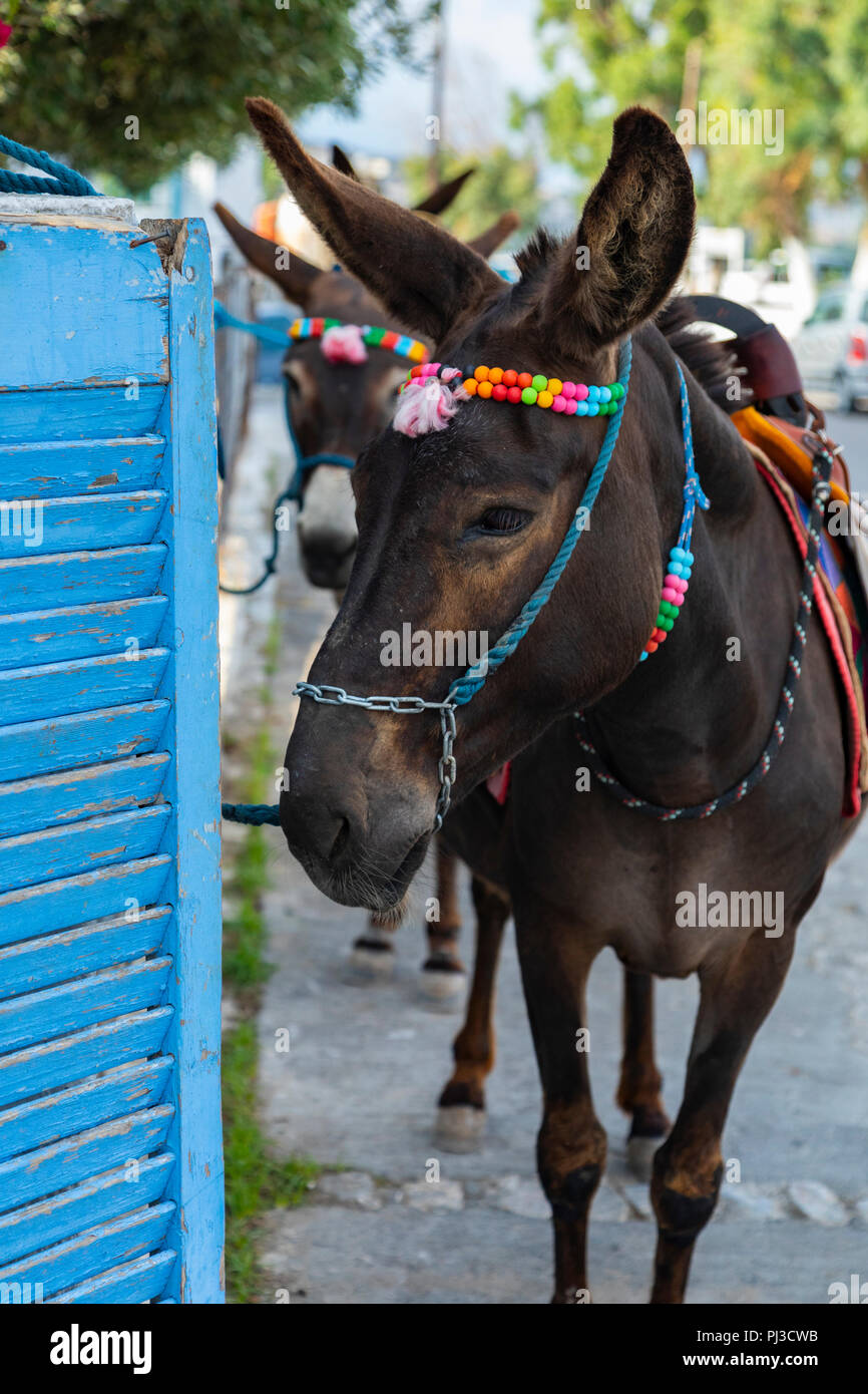 Fabulous Donkeys In Santorini Stock Photos Donkeys In Santorini Ibusinesslaw Wood Chair Design Ideas Ibusinesslaworg